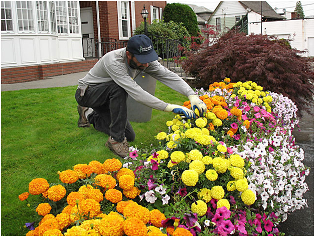 Landscapers Toronto