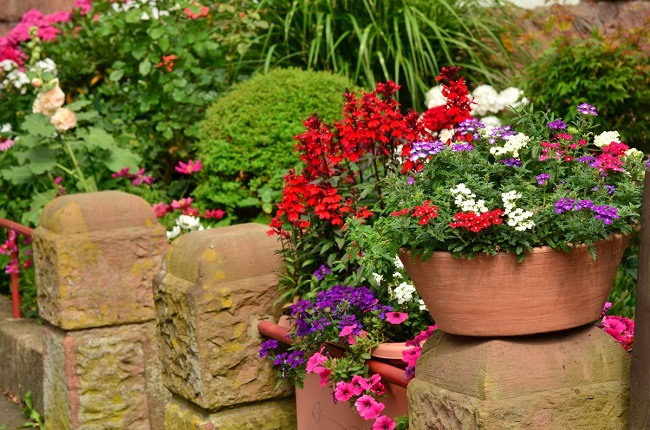 Top 10 Summer Flowers for Backyard Landscaping in Toronto